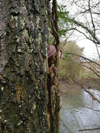 cofTrees & Fungi