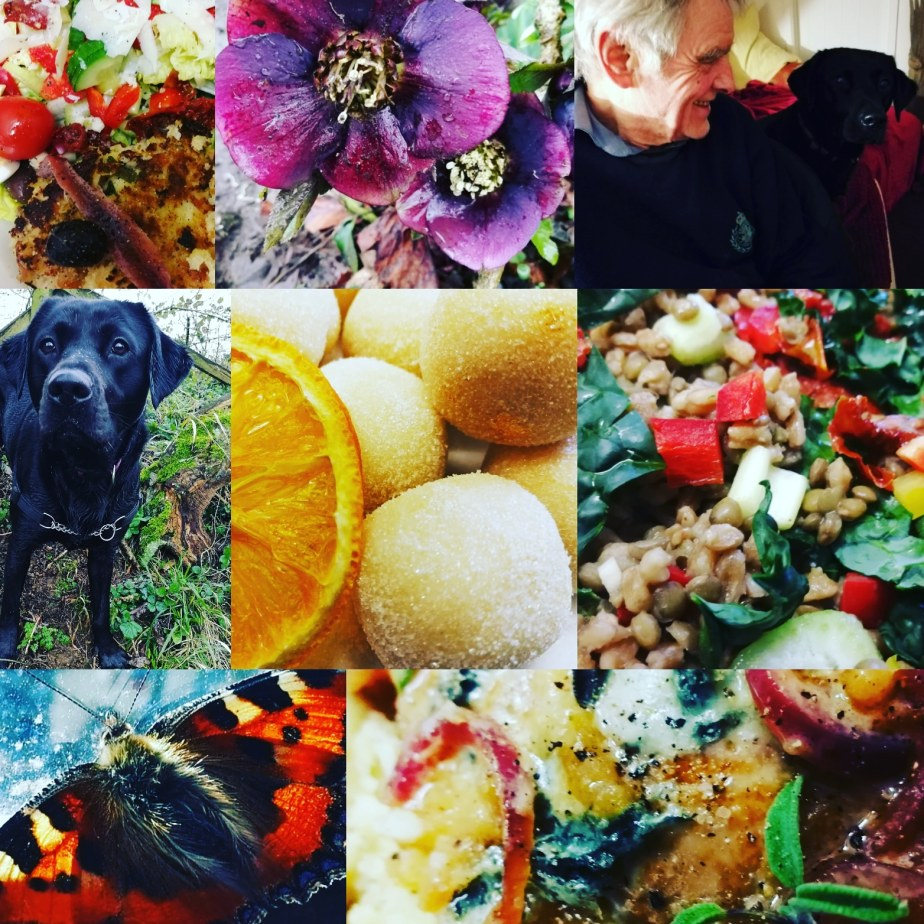 food, dogs, travel, nature, flowers, travel