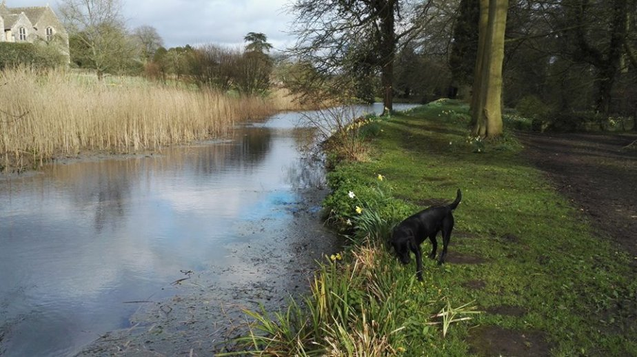 Gardens, dogs, walking, Labradors