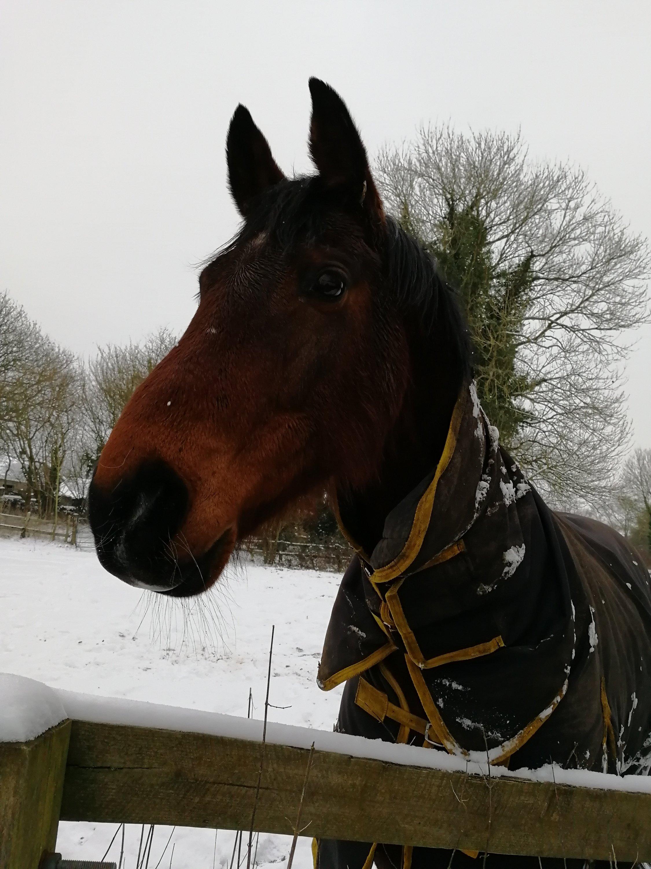 horses, Wiltshire, dog walking, water meadow, rambling