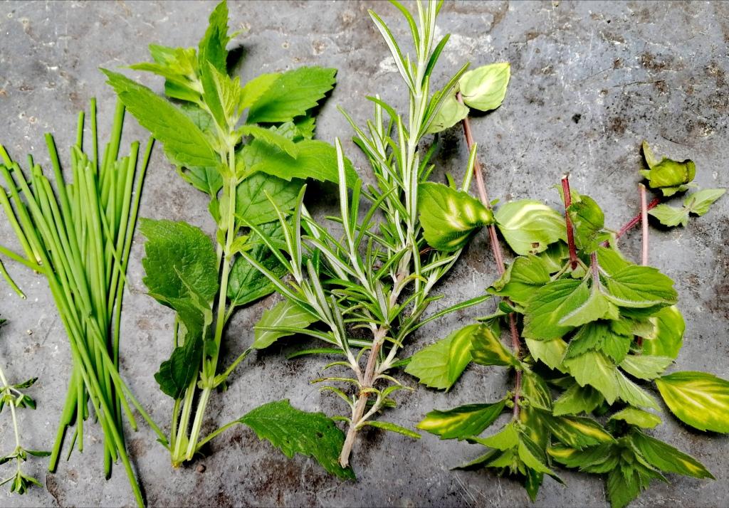 herbs, basil, mint, dill, rosemary, lemon balm